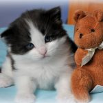 Nos chatons disponibles